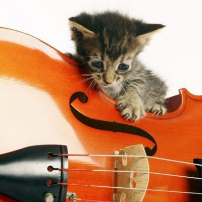 Gatito y violin 691 1280x640